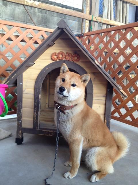 犬小屋に設置したアニマル柄のテラコッタ製アルファベット・ネームプレートcoro